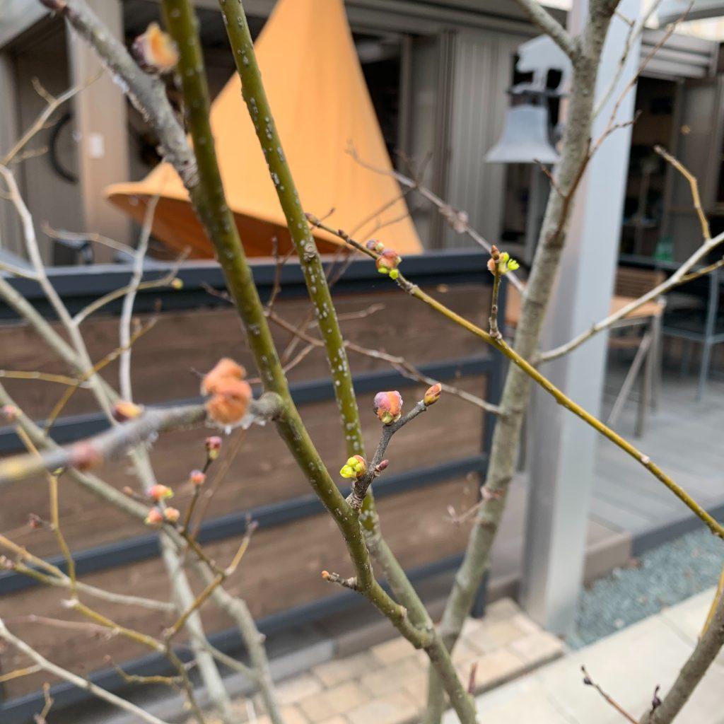 タケウチの春